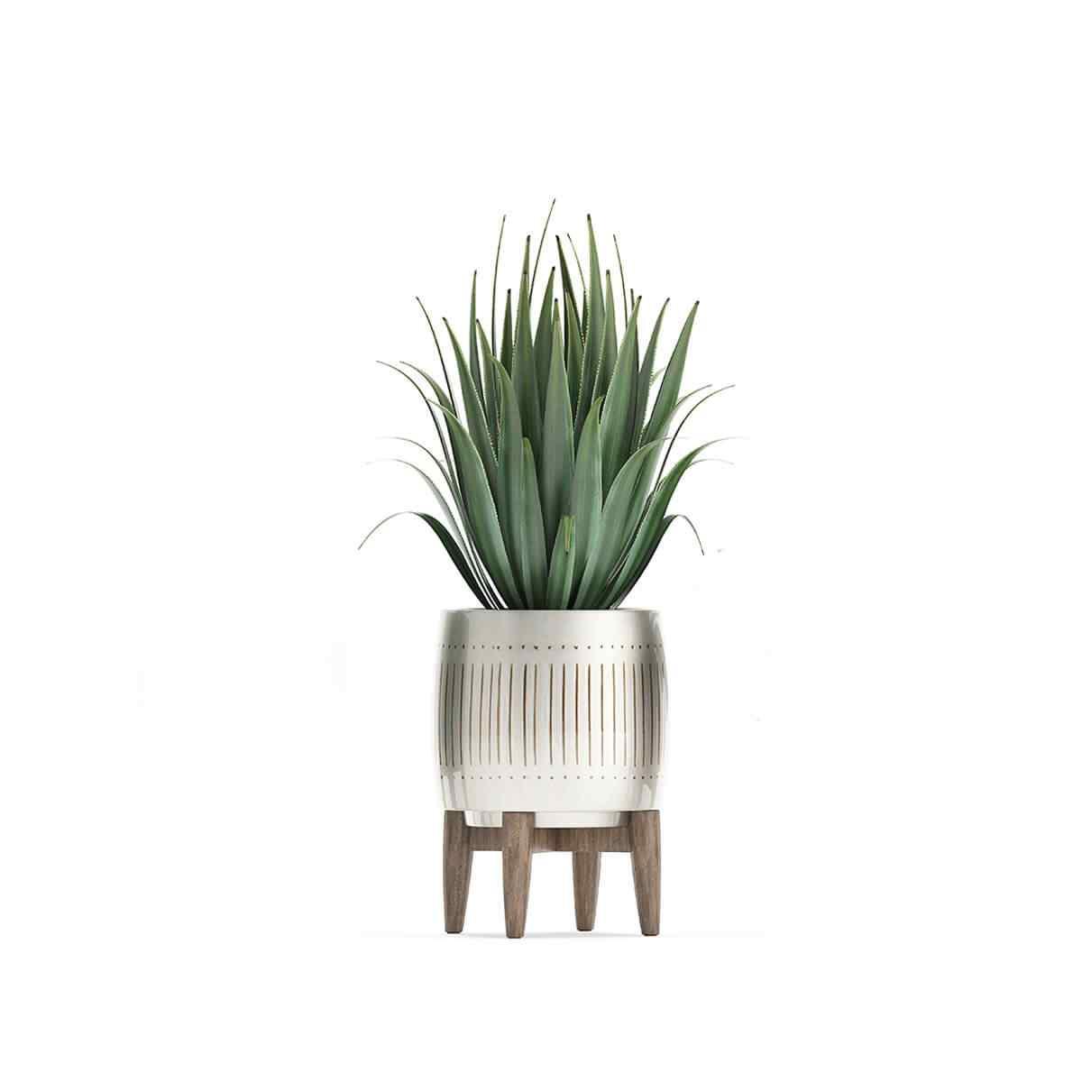 https://www.jardineriasur.cl/wp-content/uploads/2018/09/product_07.jpg