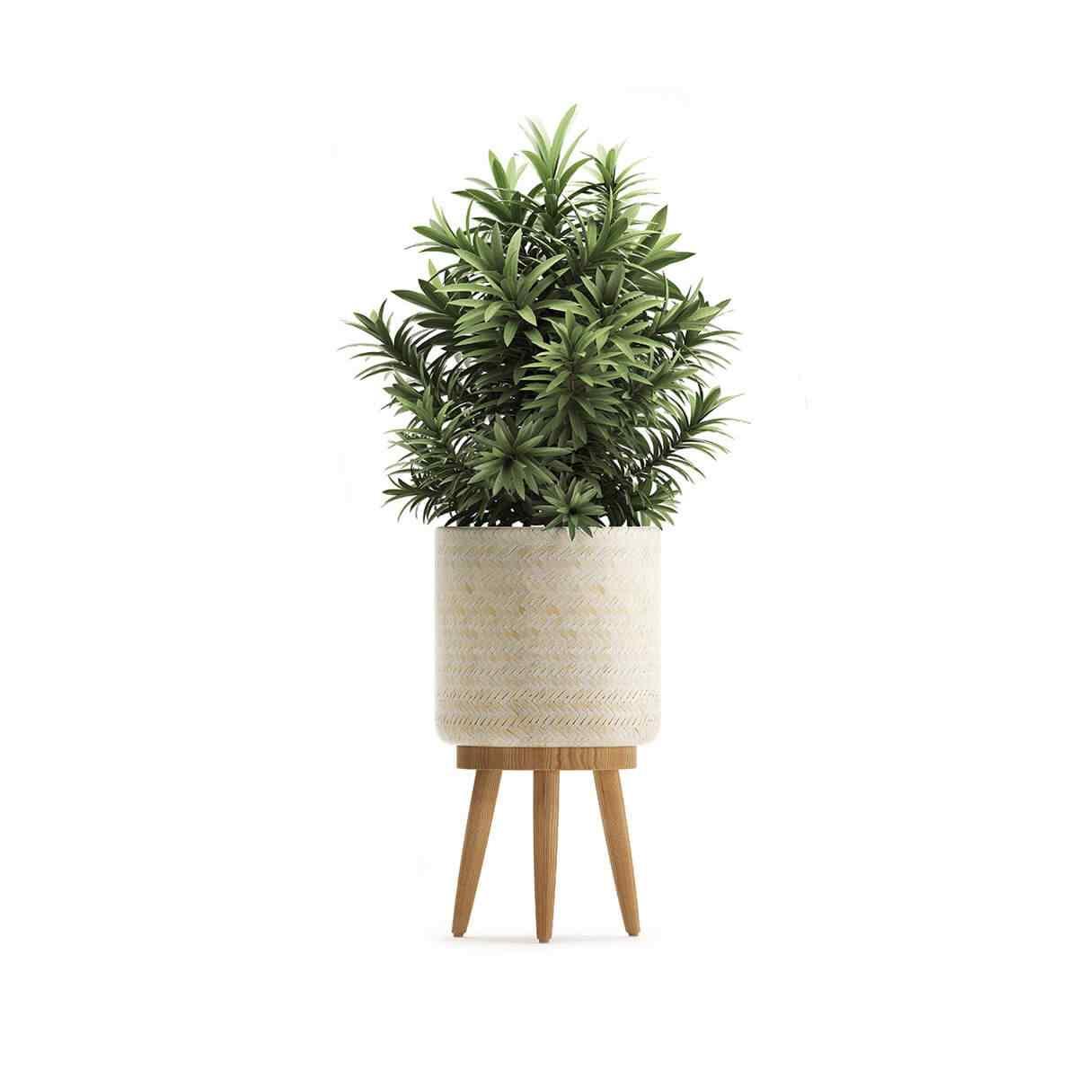 https://www.jardineriasur.cl/wp-content/uploads/2018/09/product_08.jpg