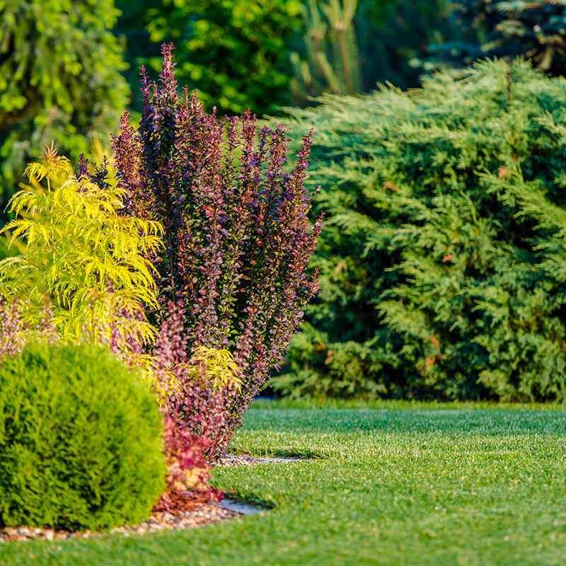 https://www.jardineriasur.cl/wp-content/uploads/2019/09/card_17.jpg