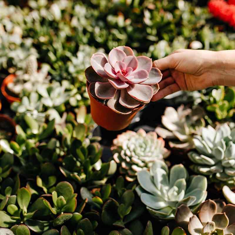 https://www.jardineriasur.cl/wp-content/uploads/2019/09/card_22.jpg
