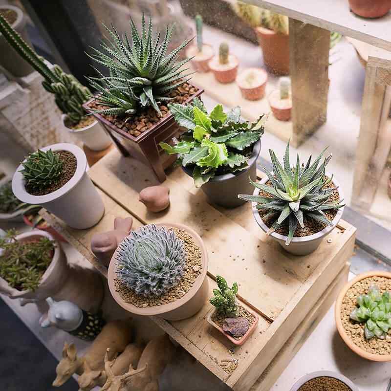https://www.jardineriasur.cl/wp-content/uploads/2019/09/card_28.jpg