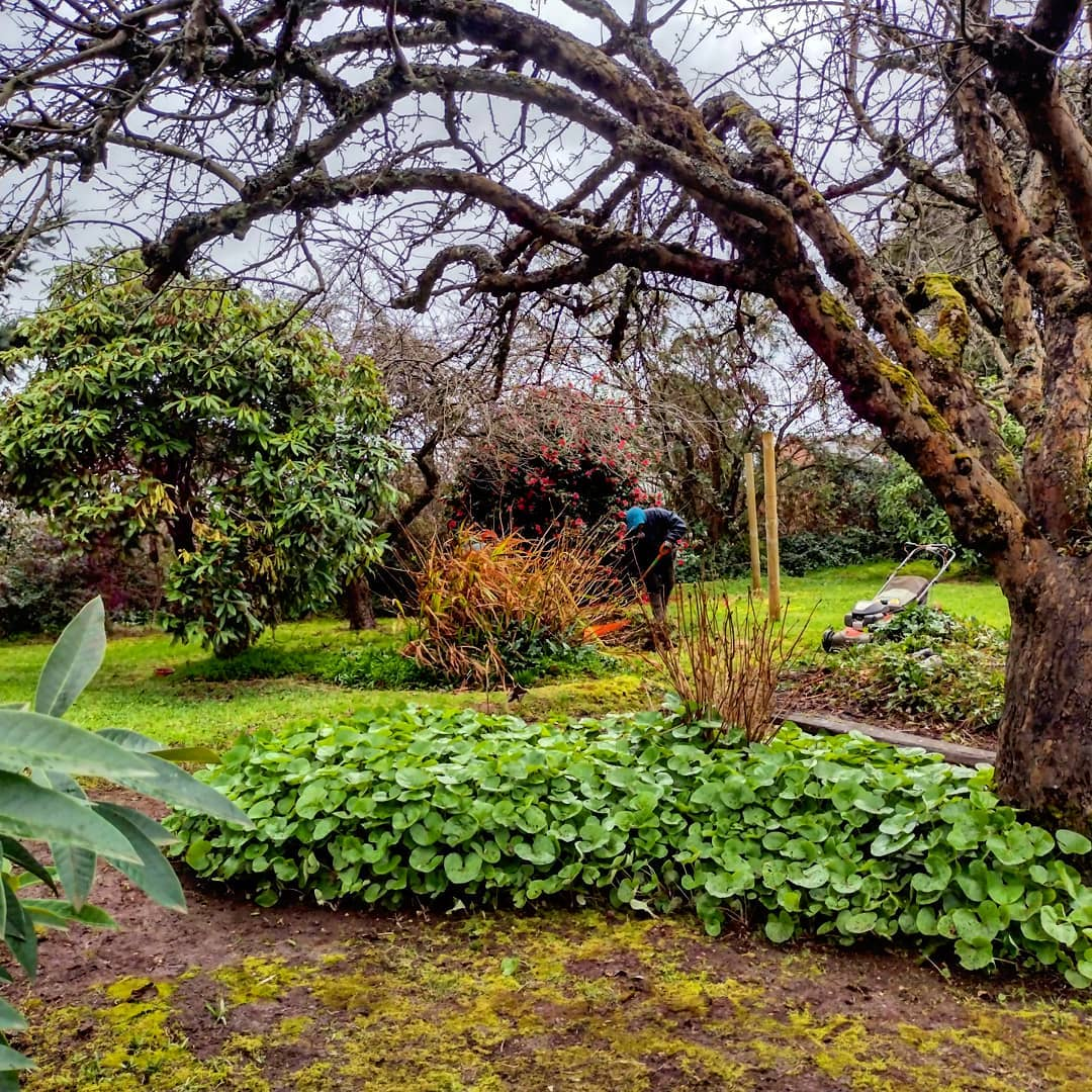 jardineria_puerto_varas 20